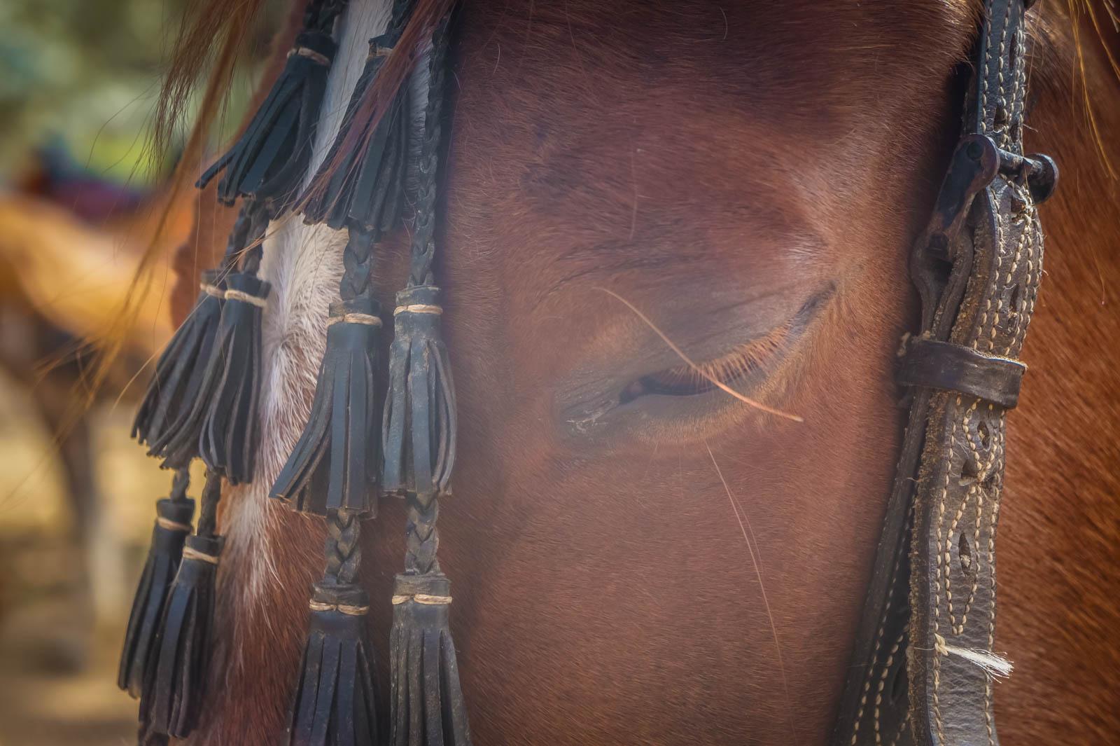 horseback-riding-pelion-greece-la-vie-en-blog-all-rights-reserved-10