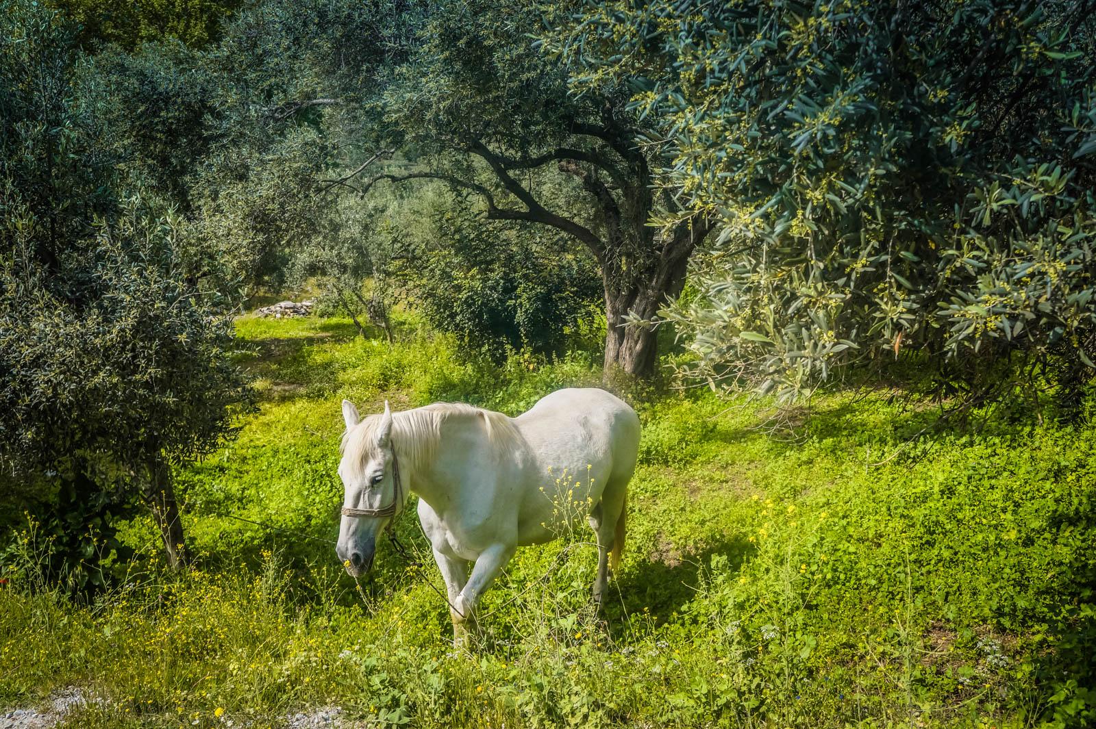 horseback-riding-pelion-greece-la-vie-en-blog-all-rights-reserved-11
