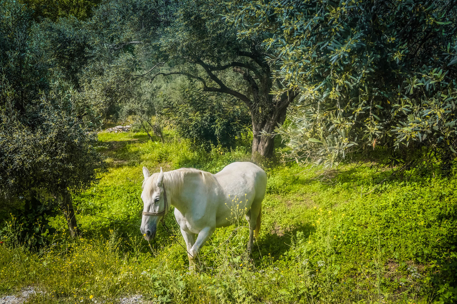 horseback-riding-pelion-greece-la-vie-en-blog-all-rights-reserved-11