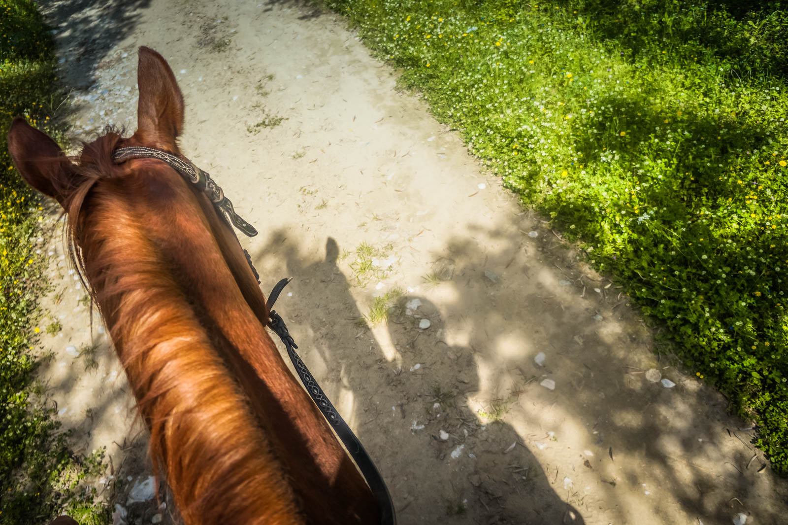 horseback-riding-pelion-greece-la-vie-en-blog-all-rights-reserved-5