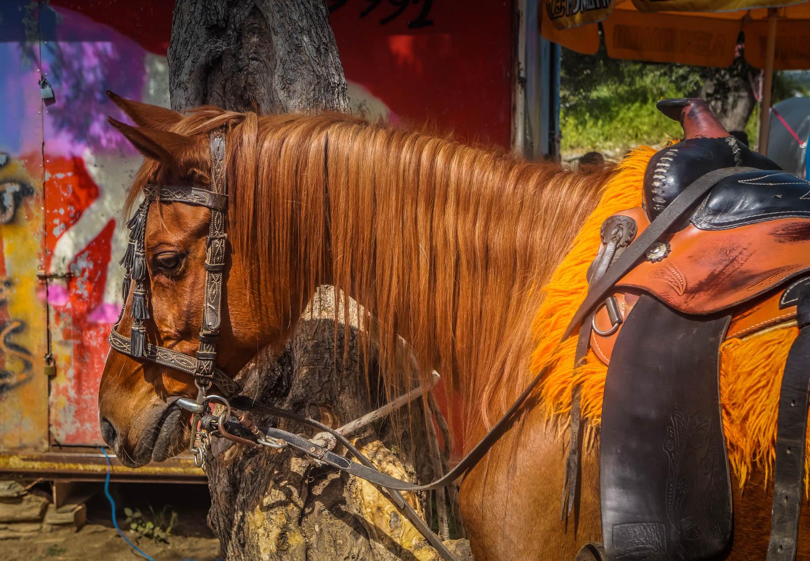 horseback-riding-pelion-greece-la-vie-en-blog-all-rights-reserved-7
