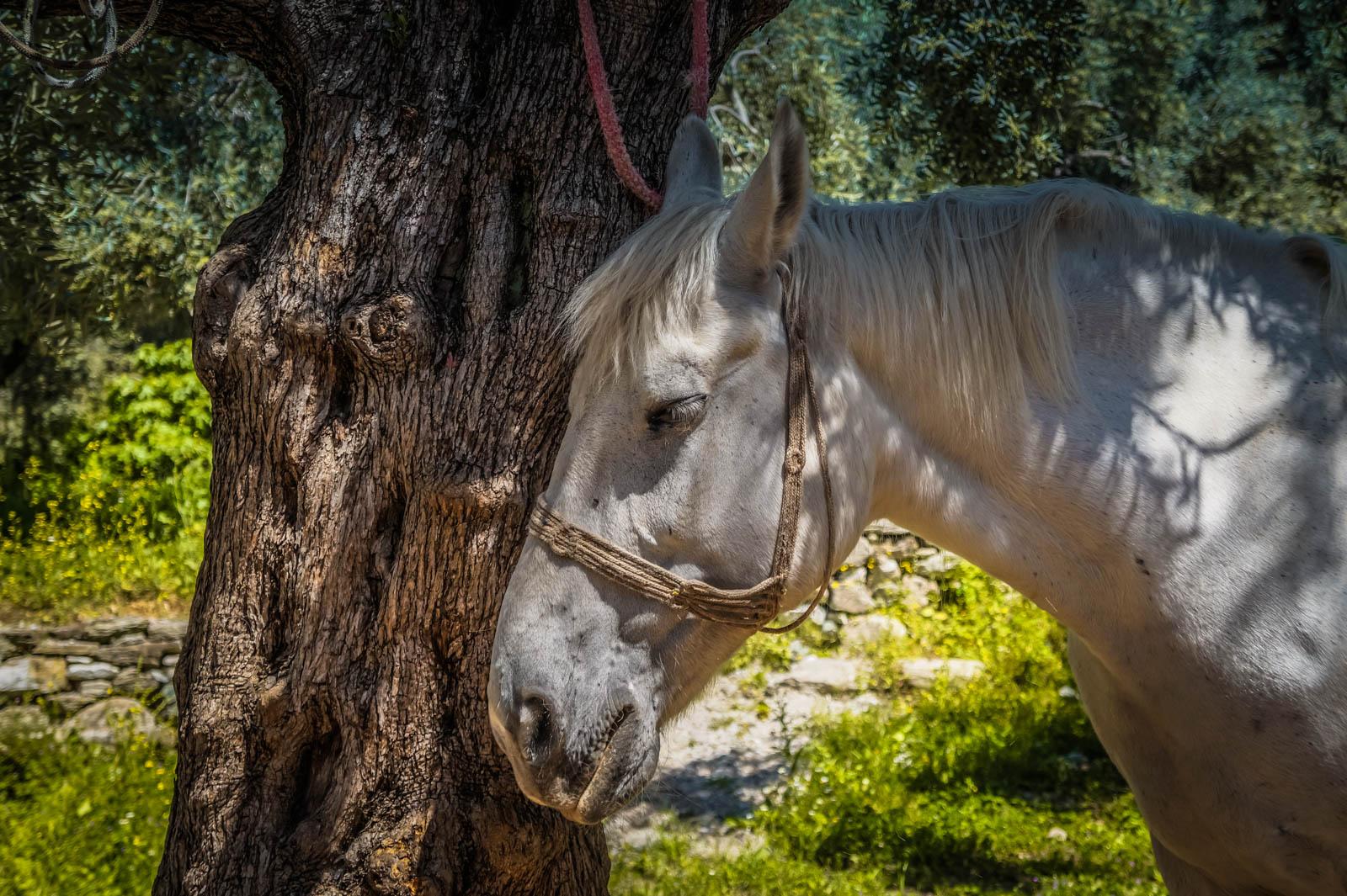 horseback-riding-pelion-greece-la-vie-en-blog-all-rights-reserved