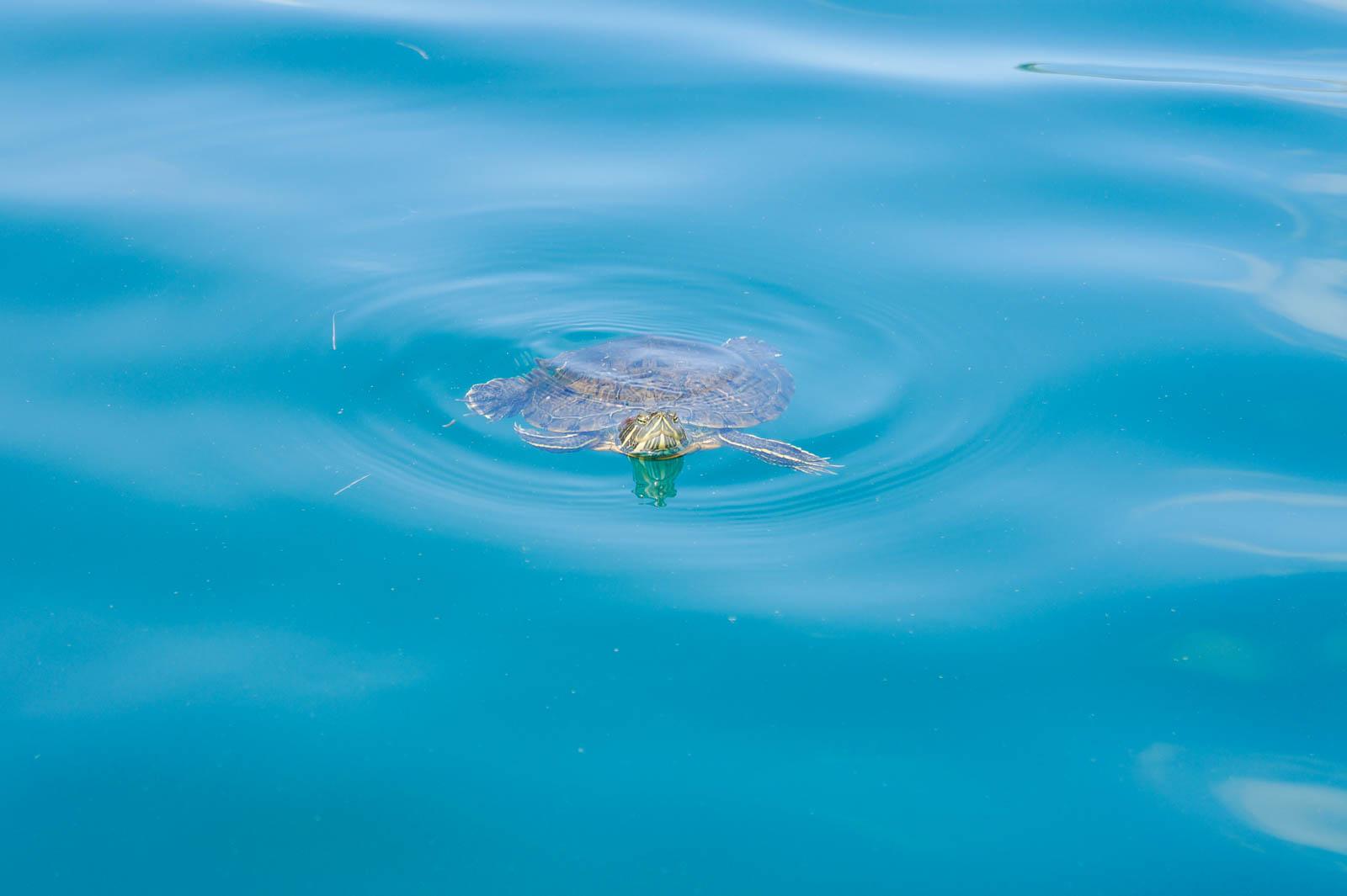 kourna-lake-crete-greece-la-vie-en-blog-all-rights-reserved-12
