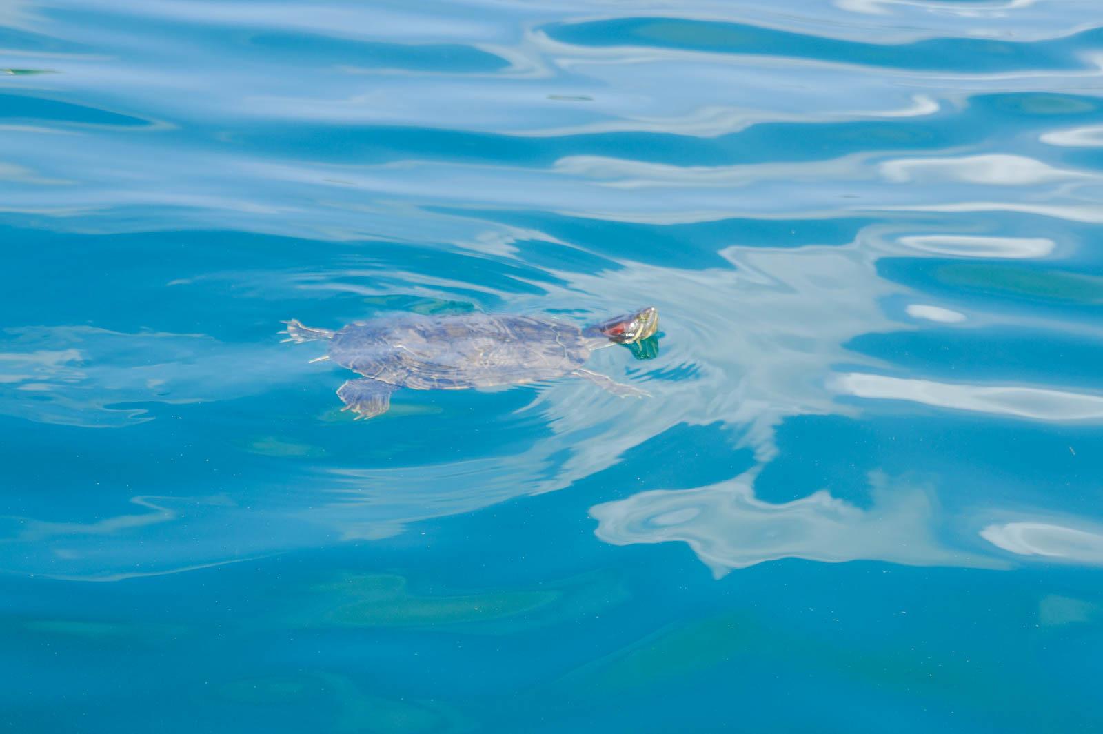 kourna-lake-crete-greece-la-vie-en-blog-all-rights-reserved-13