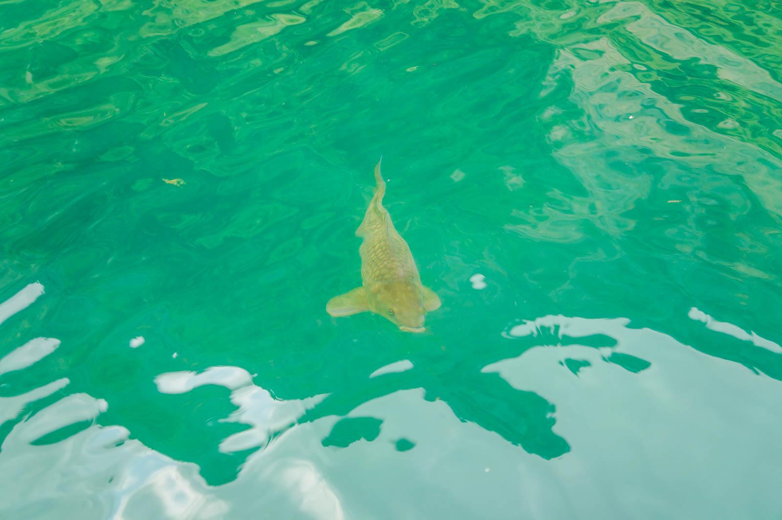 kourna-lake-crete-greece-la-vie-en-blog-all-rights-reserved-5