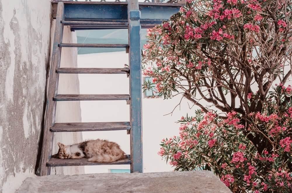 astypalea-greece-la-vie-en-blog-all-rights-reserved31
